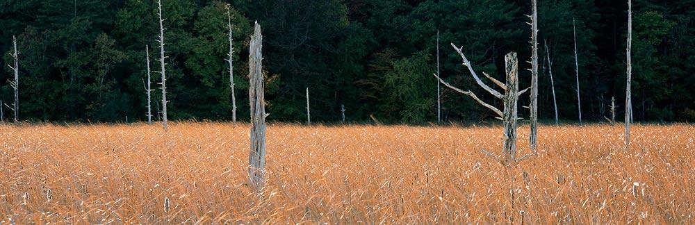 Salted Cedars