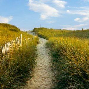 Path To National Seashore Wellfleet