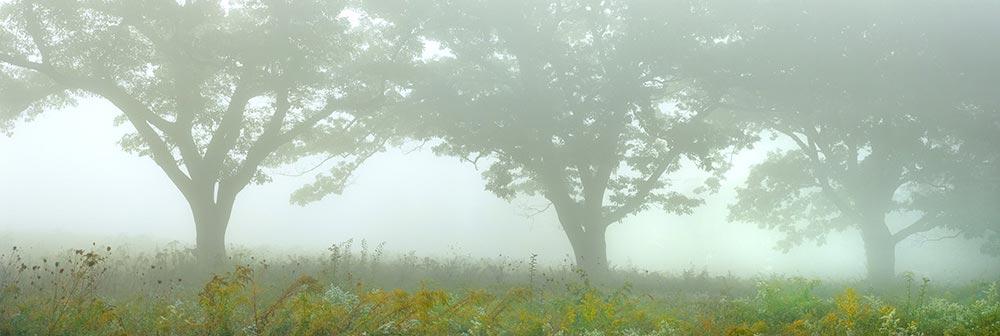 September field